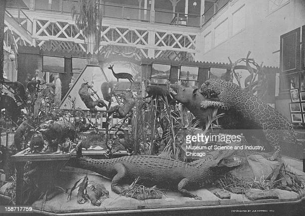 The display of animals native to British Guiana in an exhibit at the Agricultural Building at the World's Columbian Exposition in Chicago Illinois...