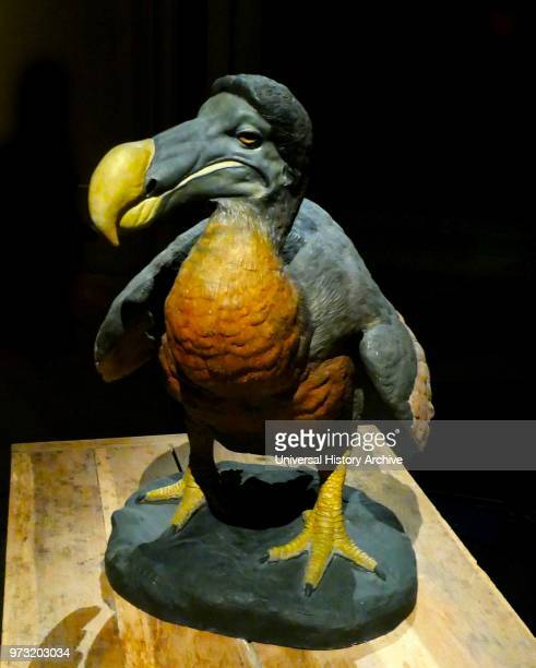 The dodo is an extinct flightless bird that was endemic to the island of Mauritius east of Madagascar in the Indian Ocean