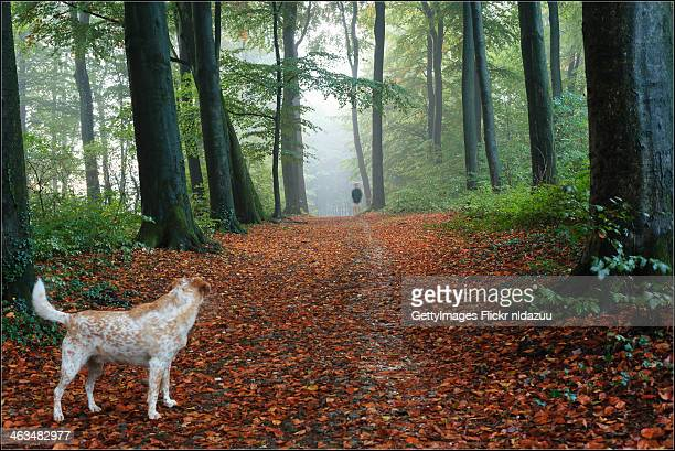 the Dog and the Wanderer