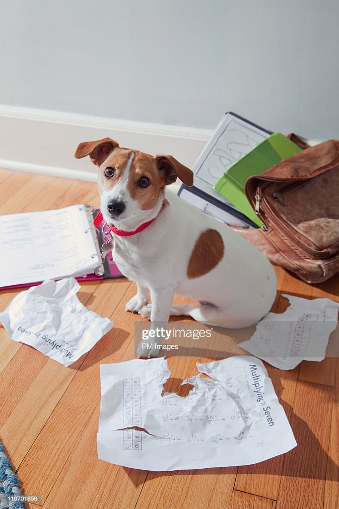 The dog ate my homework : Stock Photo