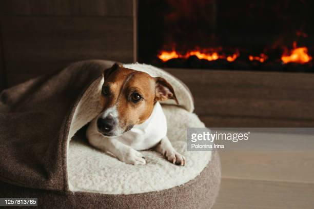 the dog is lying next to the fireplace. - pet bed stock pictures, royalty-free photos & images