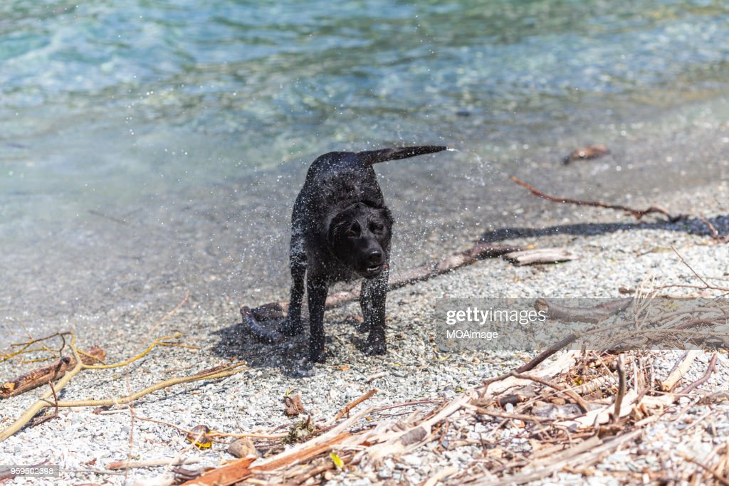 The dog on the lakeside,South Island,NewZealand : Stock-Foto