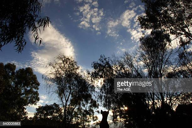 The Dog on the Tuckerbox statue in Gundagai in the Southern Highlands of New South Wales 22 July 2001 THE AGE Picture by PAUL HARRIS