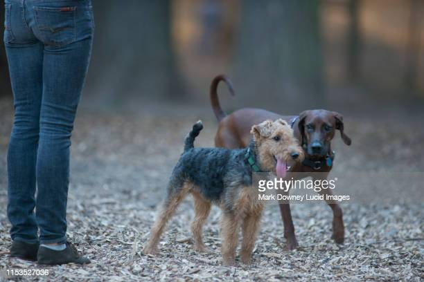 the dog park - image stock-fotos und bilder