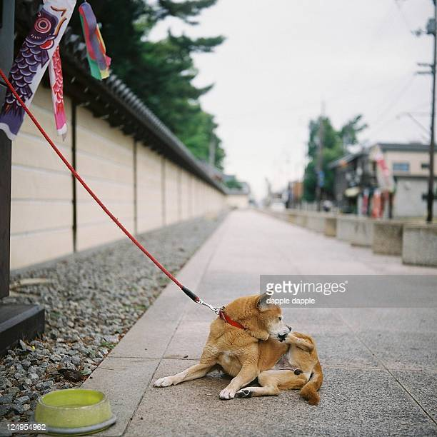 The dog which lives in Zentsuji