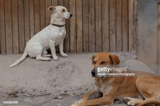 The Dogs of Machu Picchu