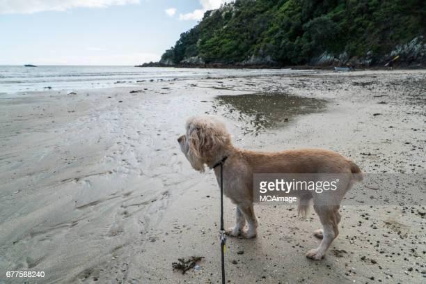 the dogs on the beach,Waiheke Island