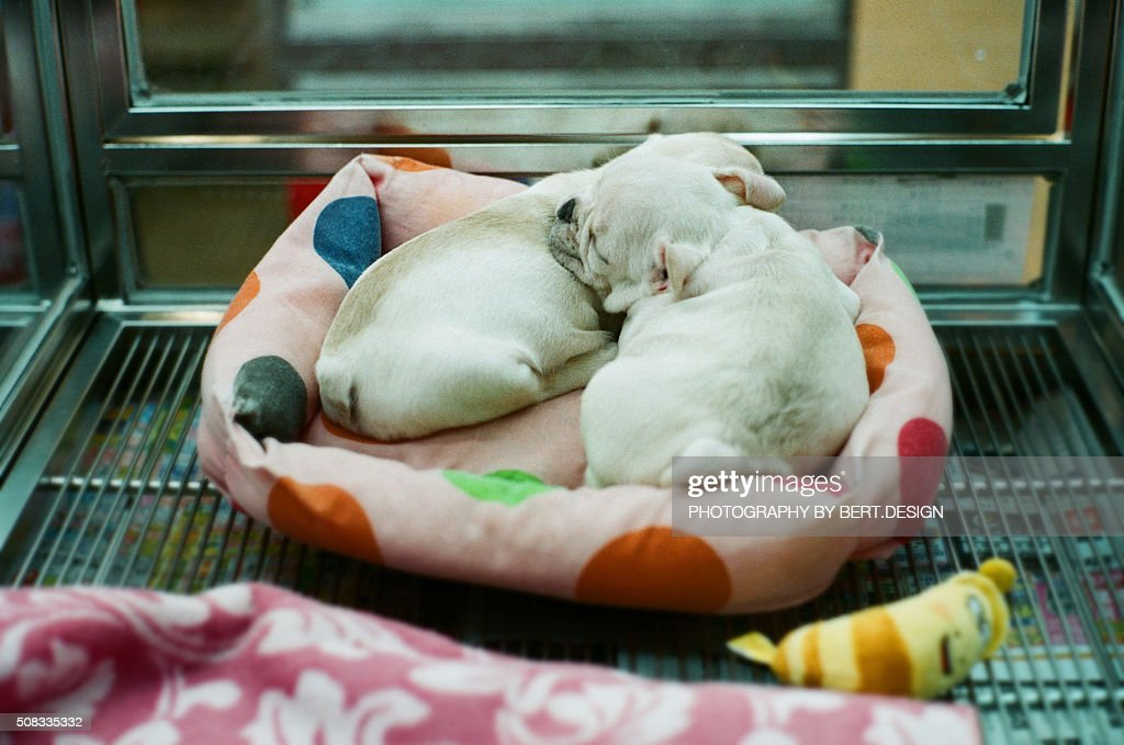 The dogs sleeping in the pet shop box : Stock Photo
