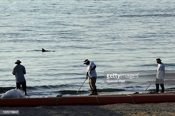 The dorsal fin of a dolphin is seen as cleanup workers collect tar balls of oil along a stretch of oilcontaminated beach June 14 2010 in Grand Isle...