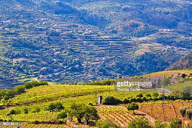 the douro valley in portugal - douro valley stock photos and pictures