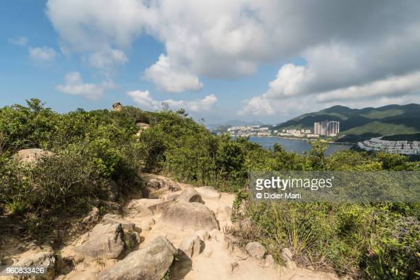 The Dragon back hiking trail in a dense forest in Hong Kong island