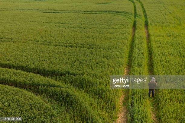 the drone view of a senior man standing in a field - johnfscott stock pictures, royalty-free photos & images
