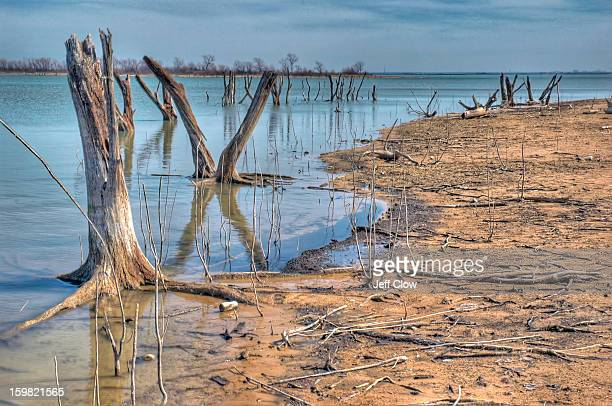 The drought in North Texas has drained significant amounts of water from Lake Lewisville and has exposed tree trunks that were once submerged. The...