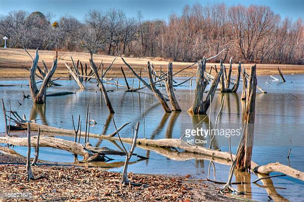 The drought in North Texas has drained significant amounts of water from Lake Lewisville and has exposed tree trunks that were once submerged. It has...