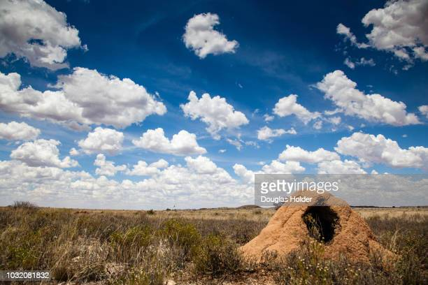 the dry and arid landscape in the northern cape is covered in anthills which have been excavated by aardvarks, not far from kimberly, south africa. - aardvark stock pictures, royalty-free photos & images