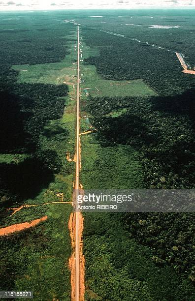 The dry bleeded amazonian forest in Amazonia Brazil in August 1989 Road between Cuiaba and Porto Velho