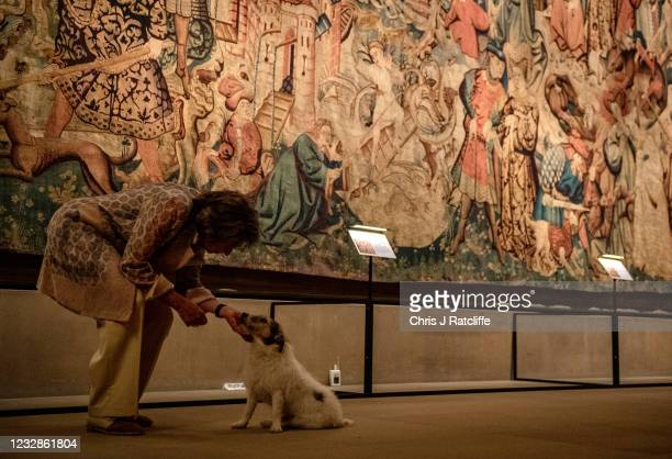 The Duchess of Devonshire pets her dog Max in front of the Devonshire Hunting Tapestries at their home, Chatsworth House on May 13, 2021 in Bakewell,...