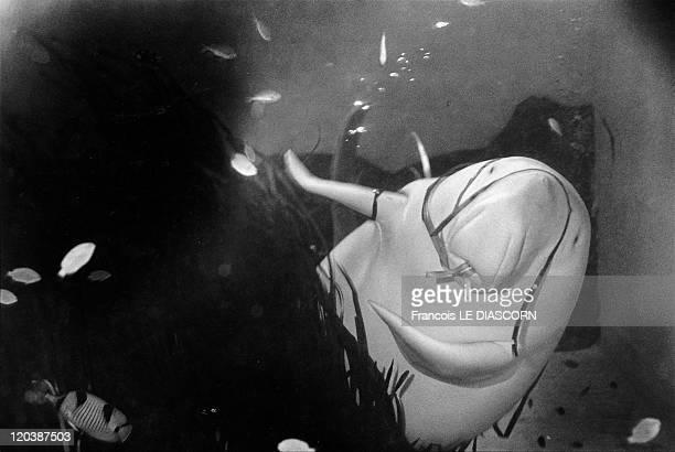 The Dugong Toba aquarium in Japan