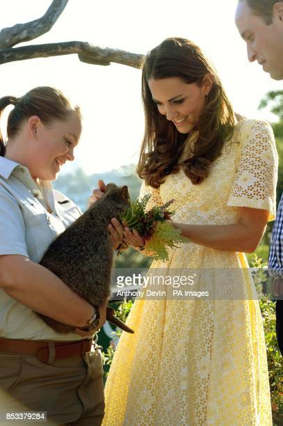 The Duke and Duchess of Cambridge feed a Quokka during a visit to Taronga zoo Sydney during the fourteenth day of their official tour to New Zealand...