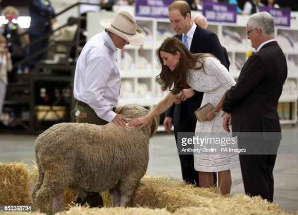 The Duke and Duchess of Cambridge meet a ram as they view agricultural stands at the Royal Easter Show at Sydney Olympic Park during the twelfth day...