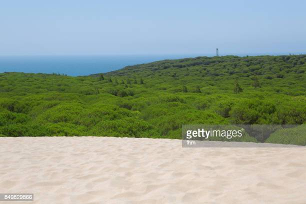 the dune of bolonia and a pine wood (cadiz province/ andalusia/ spain) - pine woodland stock pictures, royalty-free photos & images