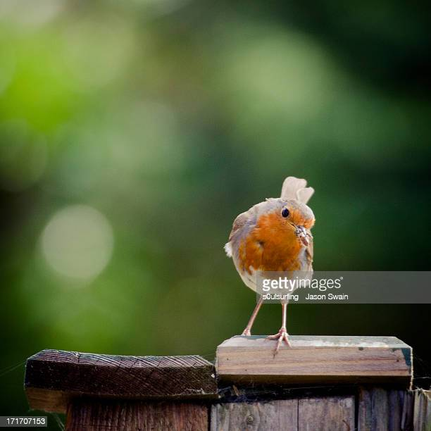the early bird gets the worm - s0ulsurfing stock pictures, royalty-free photos & images