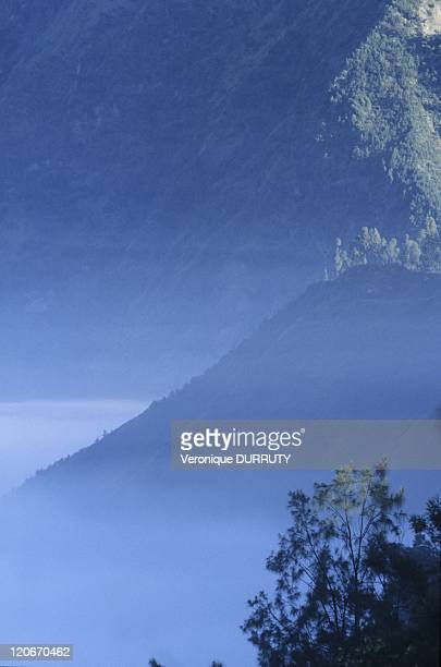 The early day mist in the Bromo-Tengger-Semeru national park in Java island, Indonesia.