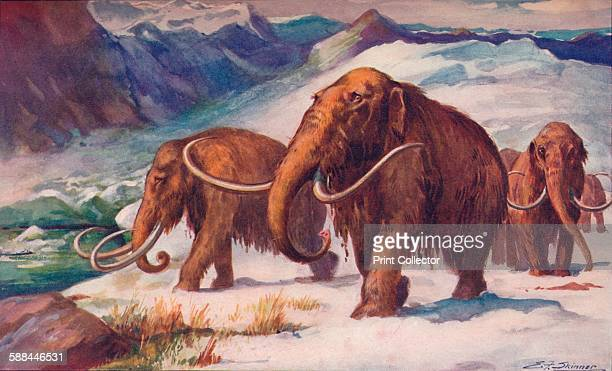 The early Ice Age, when mammoths roamed the Earth and Man was arising, 1907. From Harmsworth History of the World, Volume 1, by Arthur Mee, J.A....