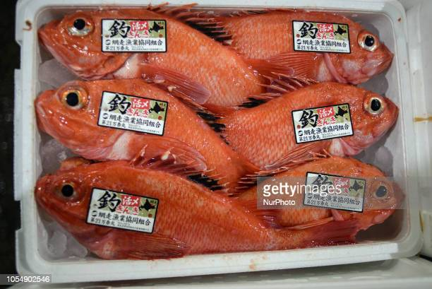 The early morning fish landing and auction at Japan Fisheries cooperative in Abashiri port Hokkaido island Japan on October 27 2018