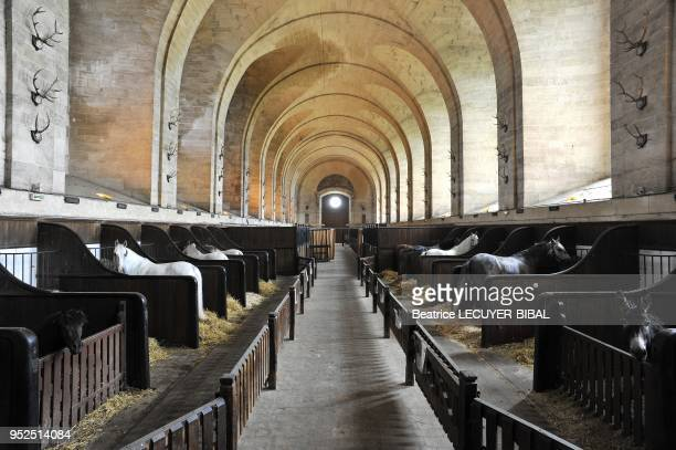 The east nave of the Musee Vivant du Cheval stables horse stalls