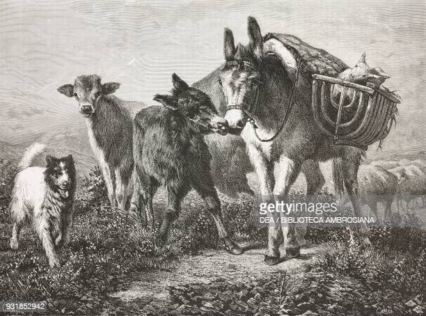 The Easter gift scene with farm animals drawing by Cornaglia from a painting by Filippo Palizzi engraving by Canedi from L'Illustrazione Italiana...