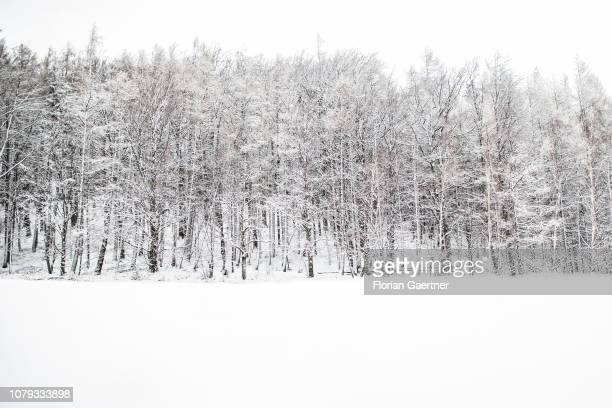 The edge of a forest is pictured near the germanpolishczech border triangle at the Zittauer Mountain on January 02 2019 in Waltersdorf Germany