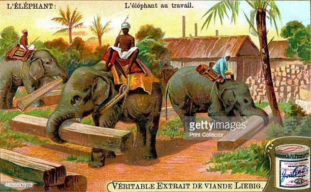 The Elephant at Work c1900 Elephants used as beasts of burden in India French advertisement for Liebig's extract of meat