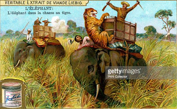 The Elephant on a tiger hunt c1900 Hunting tigers in India during the British Raj period French advertisement for Liebig's extract of meat
