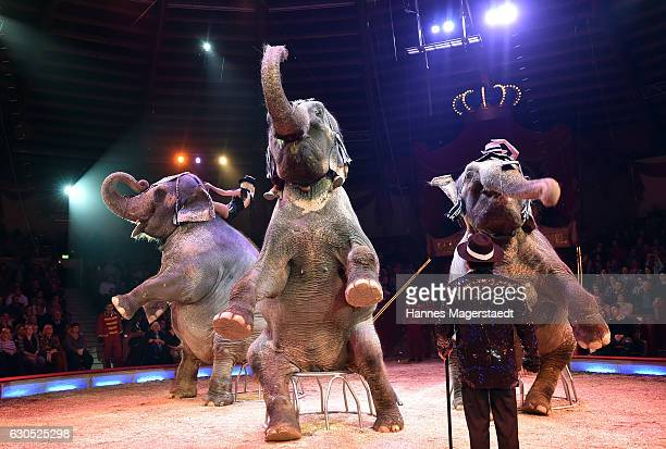 The elephant show of James Puydebois during the premiere of 'Tierisch gut' at Circus Krone on December 25 2016 in Munich Germany
