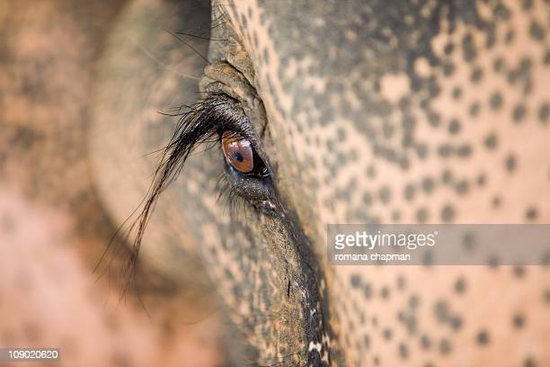 The elephant's eye