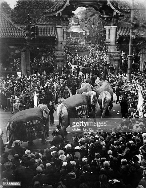 The elephants of the circus Powers are being led through the gate of the Berlin Zoo at Budapester Strasse Photographer Herbert Hoffmann Published by...
