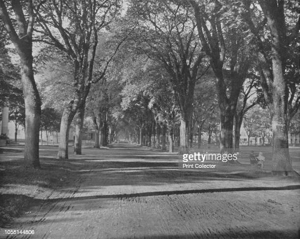 The Elms' New Haven Connecticut USA circa 1900 The first elms were planted on the New Haven Green in 1686 From Scenic Marvels of the New World edited...