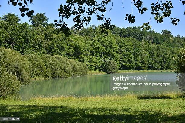The emerald pond in woodland in middle wild vegetation
