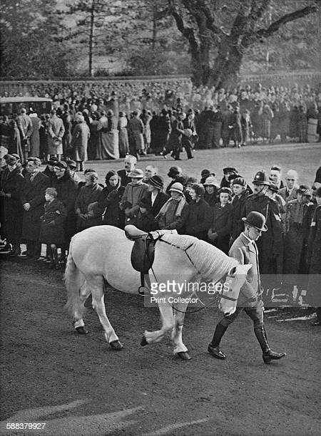King George's white pony Jock which he rode only a few days before his death being led in the procession conveying the coffin from Sandringham Church...