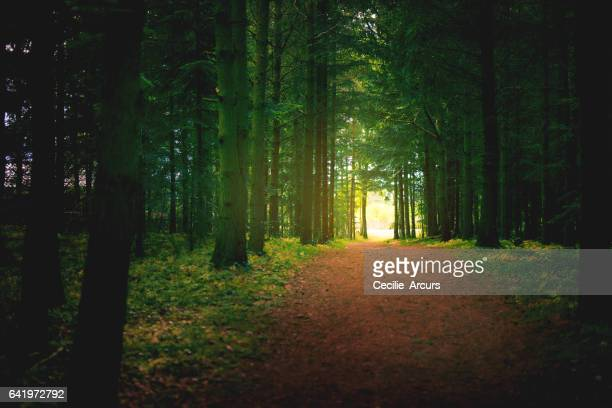 The enchanting enigma of a forest
