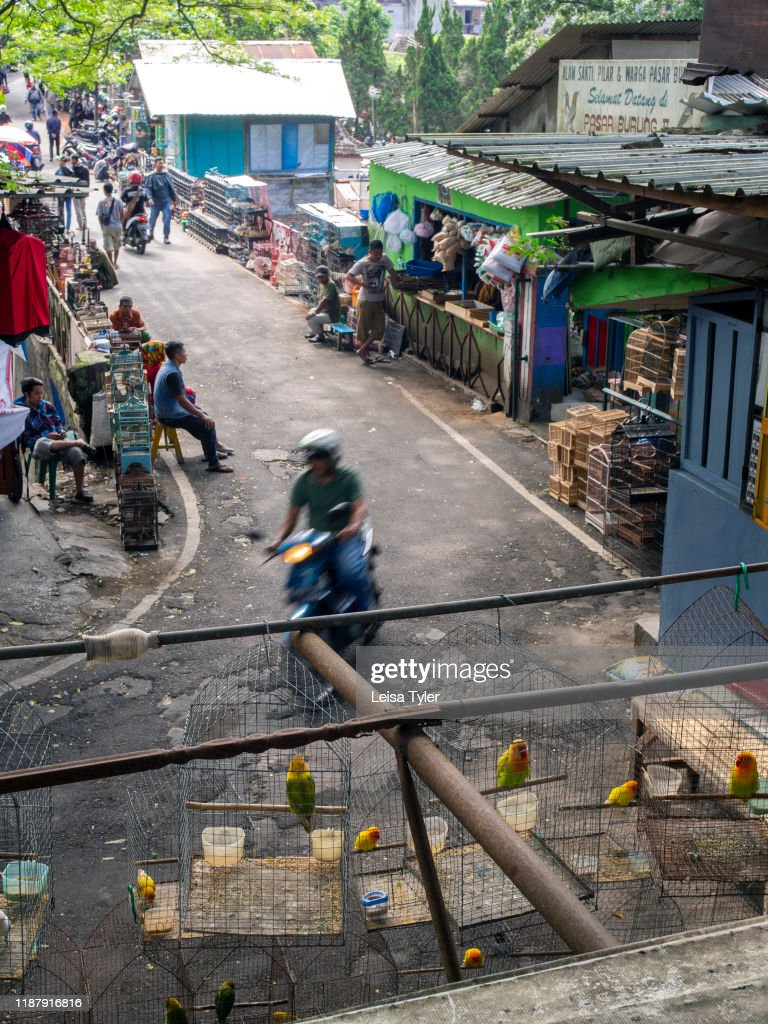 The Entrance To The Bird And Flower Market In Malang Java Indonesia News Photo Getty Images
