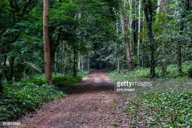 the entry banco national park in abidjan - abidjan stock pictures, royalty-free photos & images
