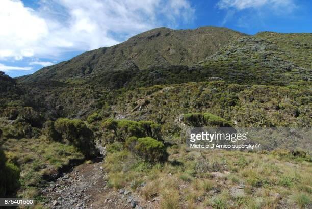 the erica zone on the high slopes of mount meru - meru filme stock-fotos und bilder