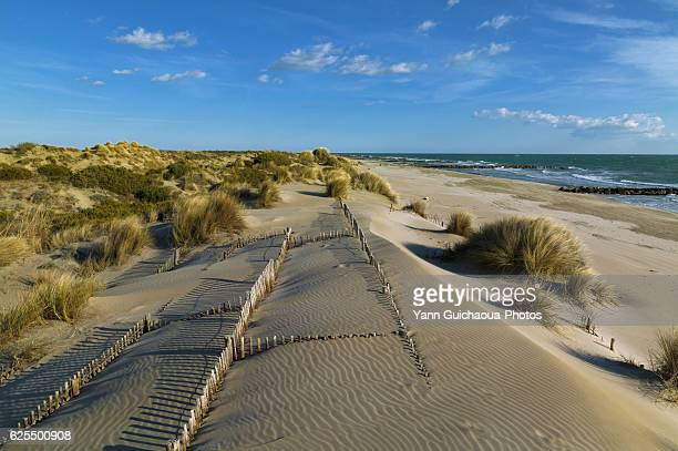 the espiguette,  wild beach in the camargue,languedoc roussillon,france - languedoc rousillon stock pictures, royalty-free photos & images