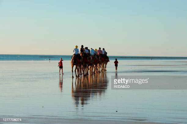 The evening Camel Tour at Cable Beach at Broome, Kimberley Coast, Western Australia.