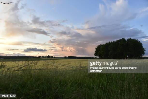 The evening light above rural landscape