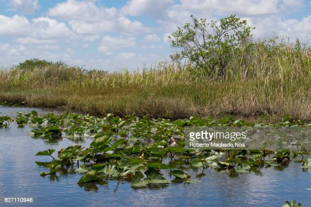 The Everglades swamp tropical climate and vegetation Also known as Pahayokee the area is a natural region of tropical wetlands in the southern...