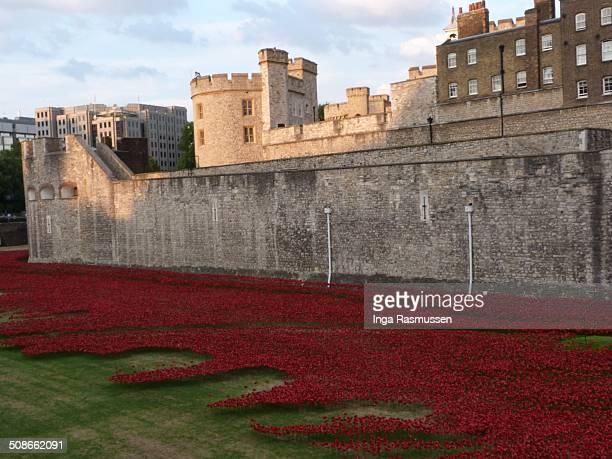 """The evolving installation """"Bloodswept Lands and Seas of Red"""" marking the centenary of the outbreak of the First World War at Tower of London, United..."""