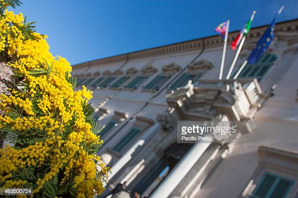 The exterior of the Quirinale decorated with mimosa and chaired by some military women Celebration of Women's Day at the Quirinale in the presence of...